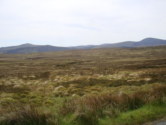 Sally Gap : Boglands