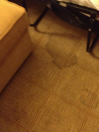 Hyatt Place Atlanta/Cobb Galleria: Unfortunate carpet stains in our room.