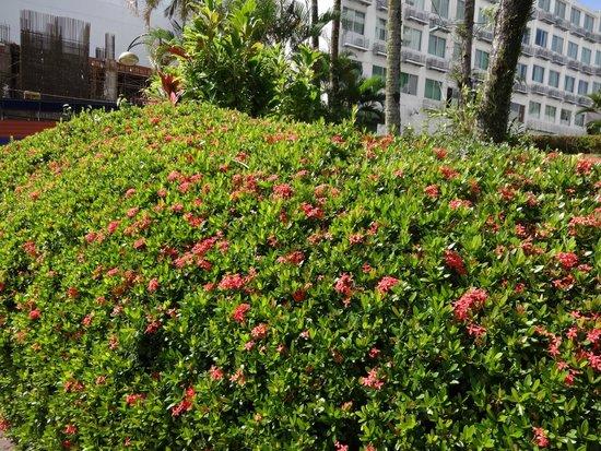Kuching Esplanade: Pretty flowers