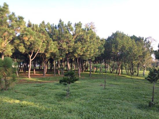 Parque Metropolitano: Área de bosque.