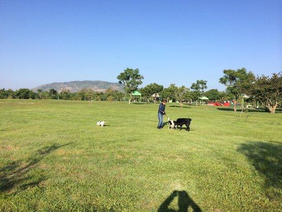 Parque Metropolitano: Área de juego para los canes.