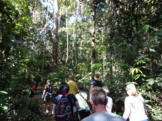 Semenggoh Nature Reserve: Tropical forest walk