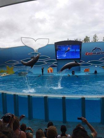 Zoomarine Algarve : Zoomarine, spectacle de dauphins !