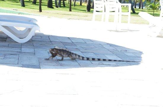 Vila Gale Eco Resort do Cabo: Iguana passeando