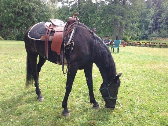 Cusheon Lake Resort: One of Tom's lovely mares