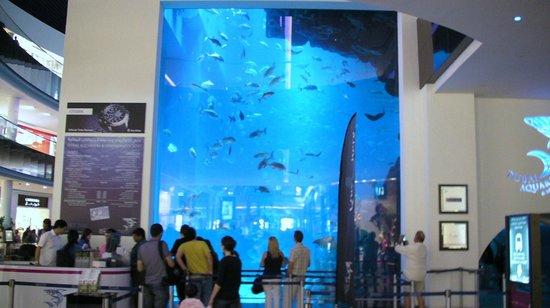 Dubai Aquarium & Underwater Zoo: Le grand aquarium du vivarium de Dubaï Mall