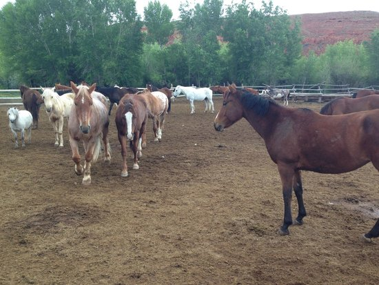 The Lazy L&B Ranch : Horses