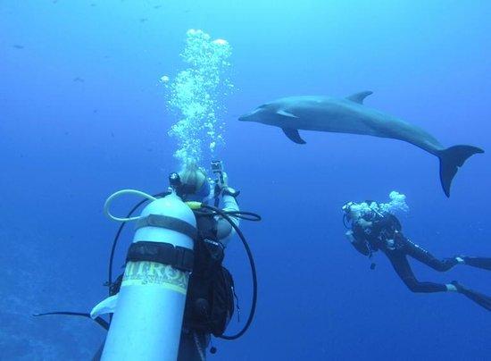 TOPDIVE Rangiroa: Diving in Rangiroa