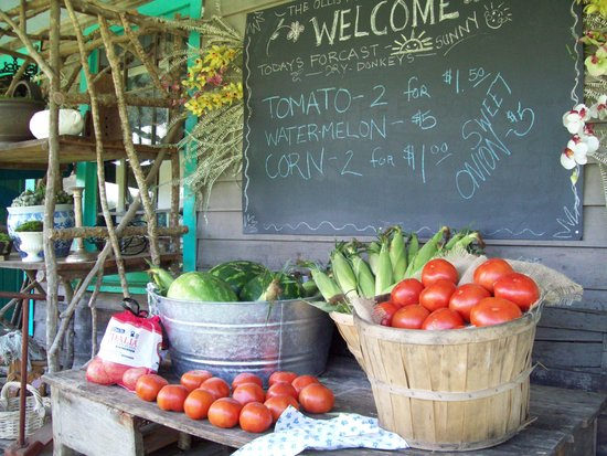 The Donkey Nest: organic, local and fresh