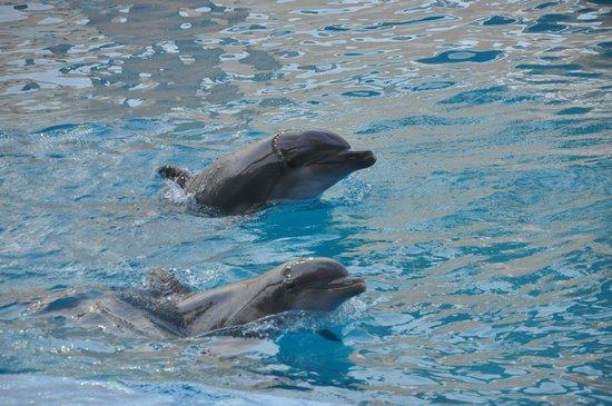 Interactive Aquarium: Dolphins swimming around