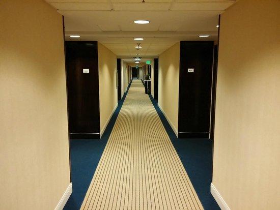 Sheraton Bellevue : Bright hallways