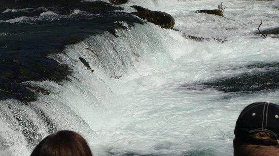 Alaska West Air: Water fall