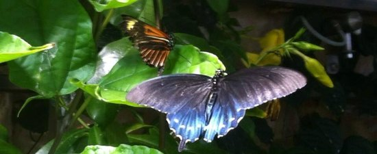 National Museum of Natural History : Butterfly exhibit.