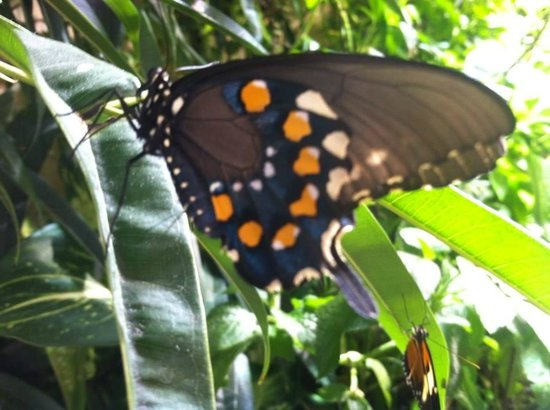 National Museum of Natural History : Get close up to all the butterflies!