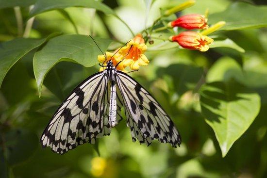 St. Louis Zoo: In the butterfly garden