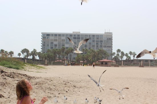Isla Grand Beach Resort : Feeding the birds on the beach with our hotel in background