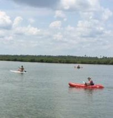 Buena Vista Inn: Paddle boarding and kayaking
