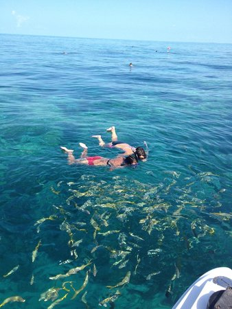 Looe Key Reef Adventures: Surrounded by fish on Looe Key