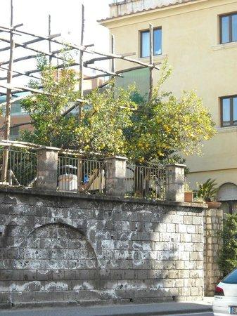 Michelangelo Hotel: Lemon trees across from the hotel