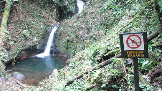 Monteverde Cloud Forest Biological Reserve : MonteVerde Cloud Forest