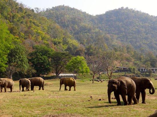 enp picture of elephant nature park chiang mai tripadvisor. Black Bedroom Furniture Sets. Home Design Ideas