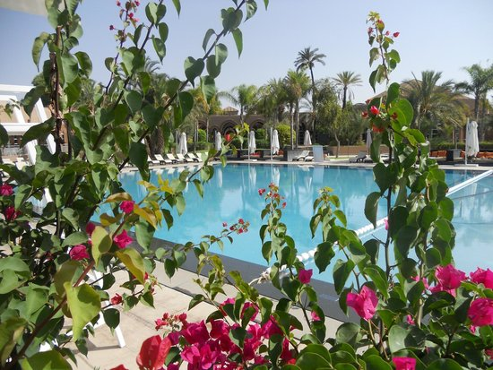 Pullman Marrakech Palmeraie Resort and Spa : La piscine
