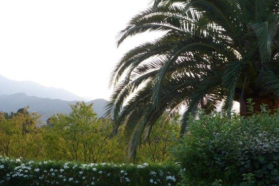 Casa Di l'Amanduli: A l'ombre du palmier