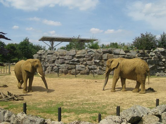 Holiday Inn Colchester : Elephants at the Zoo