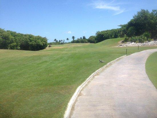 Iberostar Golf Club Cancun: イグアナもお散歩