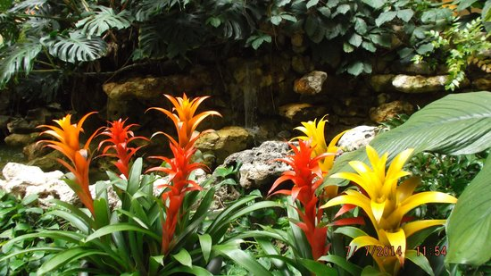 Embassy Suites by Hilton Orlando - North: Tropical Paradise