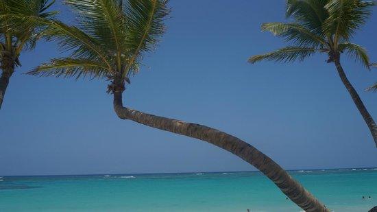 Hotel Riu Palace Bavaro: palmeiras em frente a praia do hotel