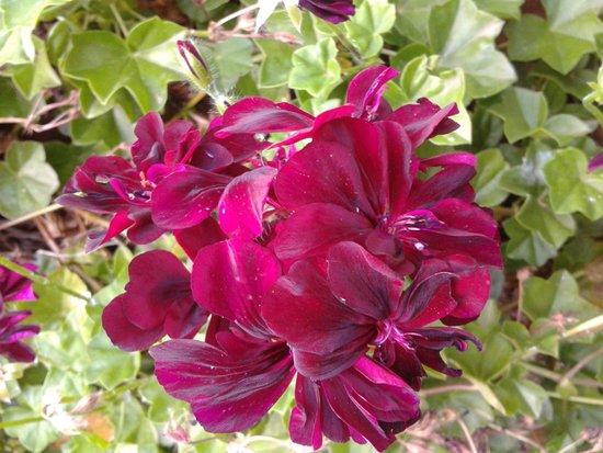 Giardini Botanici Hanbury: fiori