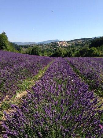 L'Oustau de la Font : Lavender Fields minutes away