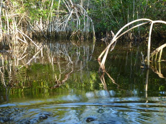 Tour The Glades - Private Wildlife Tours: wonderful reflections