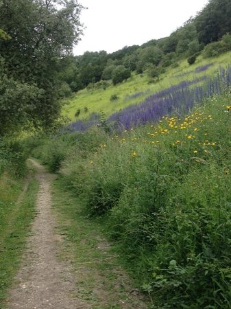 Box Hill: A beautiful display of wild flowers towards the end of the walk