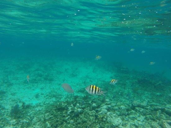 Flying Cloud: Bahamas Snorkeling