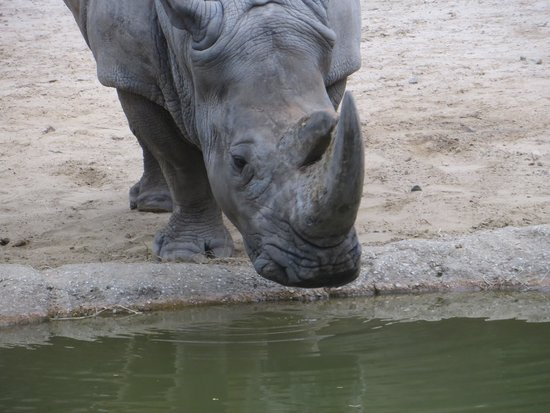 The Maryland Zoo: Just took a drink