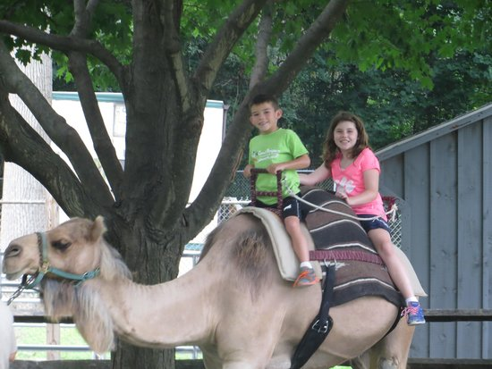 The Maryland Zoo: Kids rode camel