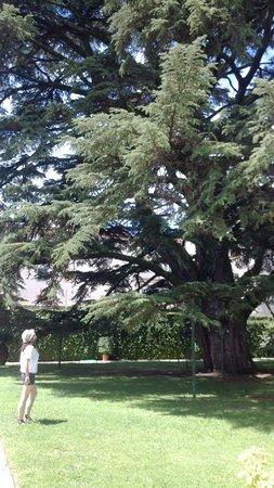 Orto Botanico di Lucca: quando dici che sei piccino...