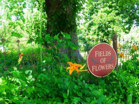 Fields Of Flowers Gatepost Foto Van Field Of Flowers Purcellville