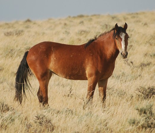 Beautiful Picture Of Red Canyon Wild Mustang Tour Cody