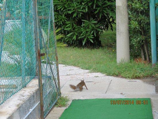 Hotel Terme Excelsior : scoiattolo a passeggio