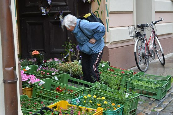 Historic Center of Cesky Krumlov : checking out the plants