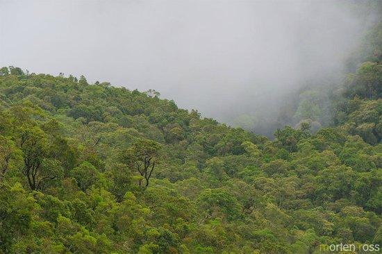 Parque Nacional do Itatiaia: Montane forest - the high lookout-point (after the white bridge)