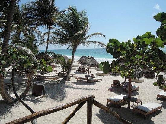 Rosa del Viento: Vista para os móveis de praia do hotel