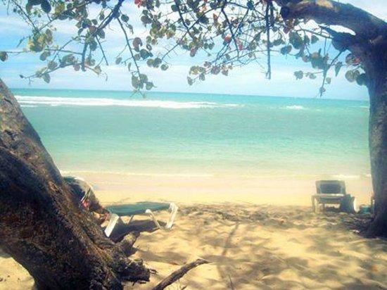 ClubHotel Riu Merengue: Playa con algas pero bonita vista
