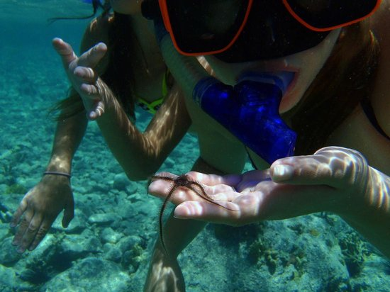 Simplicity Charters : sea life