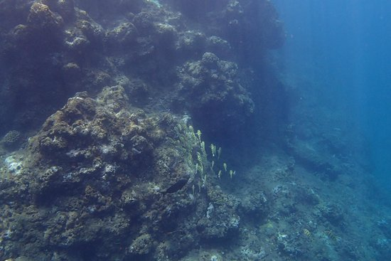 Na Pali Experience : Snorkeling with many tropical fish