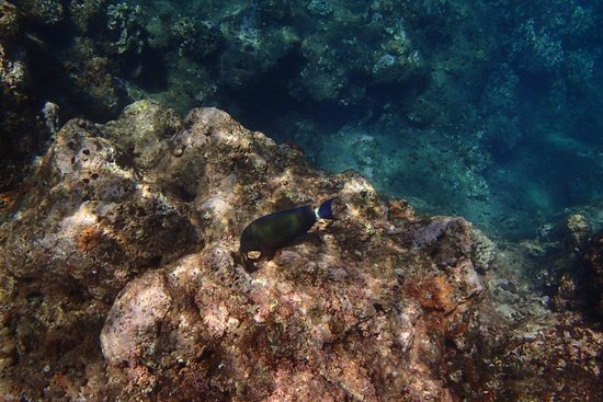 Na Pali Experience : snorkeling