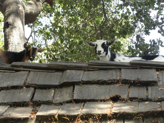 Children's Fairyland : Cookie & Oreo up on their rooftop!